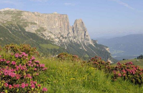 Escursionismo sull'Alpe di Siusi 4